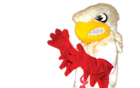 The Little Hawk Wants You!