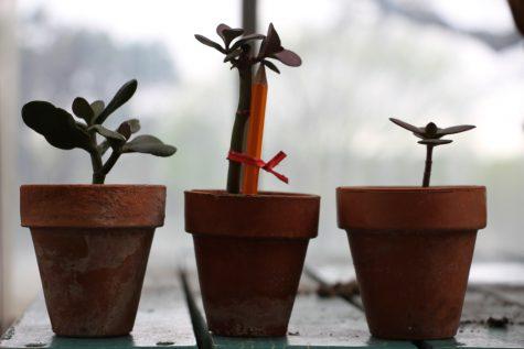 The Greening Movement