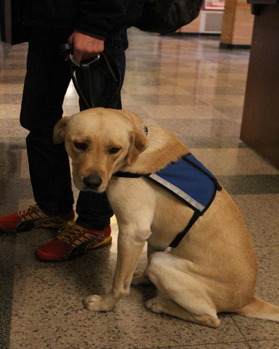 Duke, Cloughs service Dog.