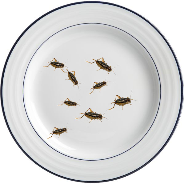 Crickets for Food