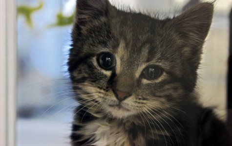 Around The Block: Witty Kitty Cats and IC Shelter Kitties Up for Adoption