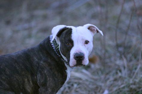 Bella Pittman, Dog Enthusiast
