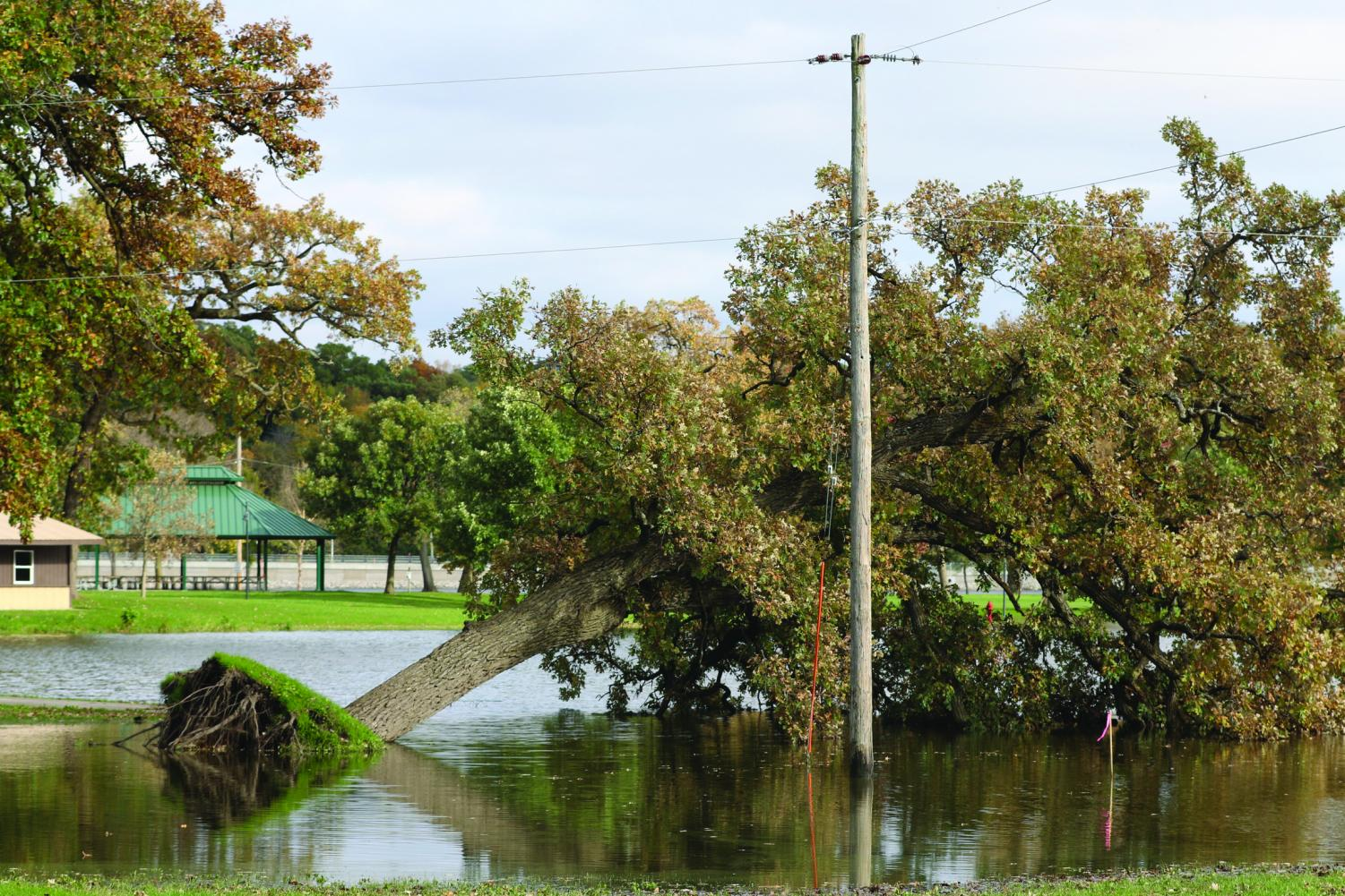 An uprooted tree in City Park