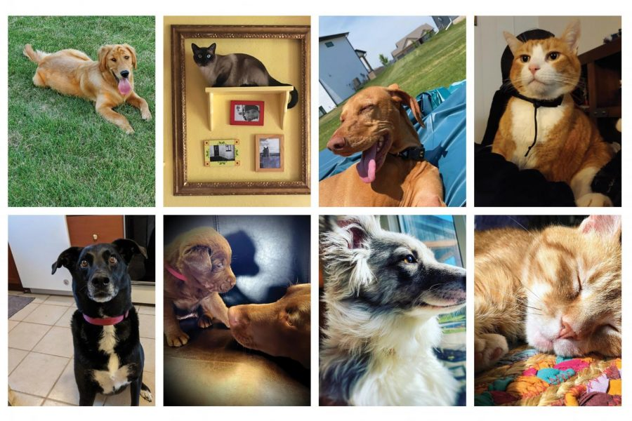 City Students and Staff Submit Pet Photos to Determine the Cutest Pet at City High